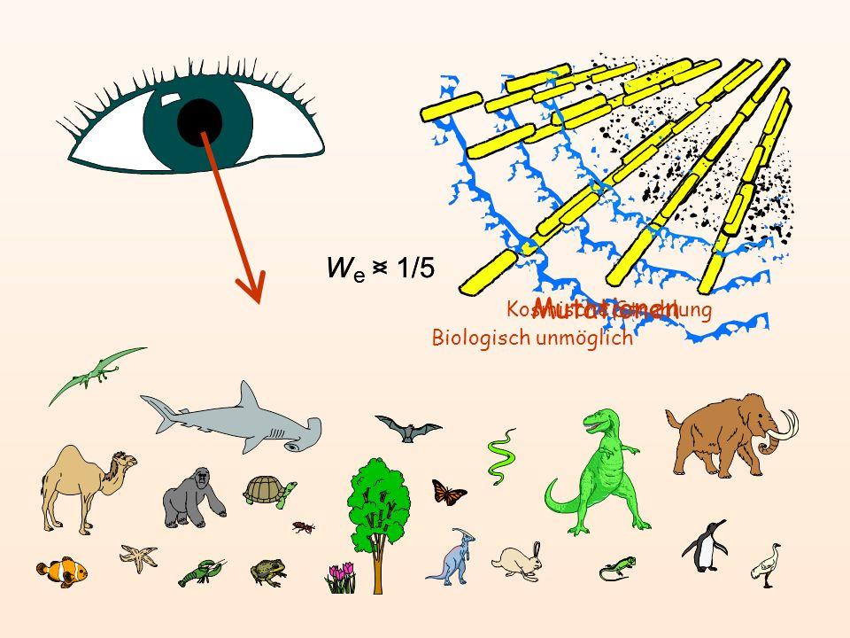 W e > 1/5 W e < 1/5 Mutationen Biologisch unmöglich Kosmische Strahlung