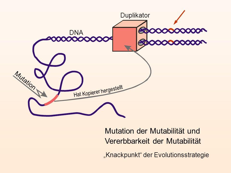 Mutation Duplikator DNA Hat Kopie herge stellt rer Mutation der Mutabilität und Vererbbarkeit der Mutabilität Knackpunkt der Evolutionsstrategie