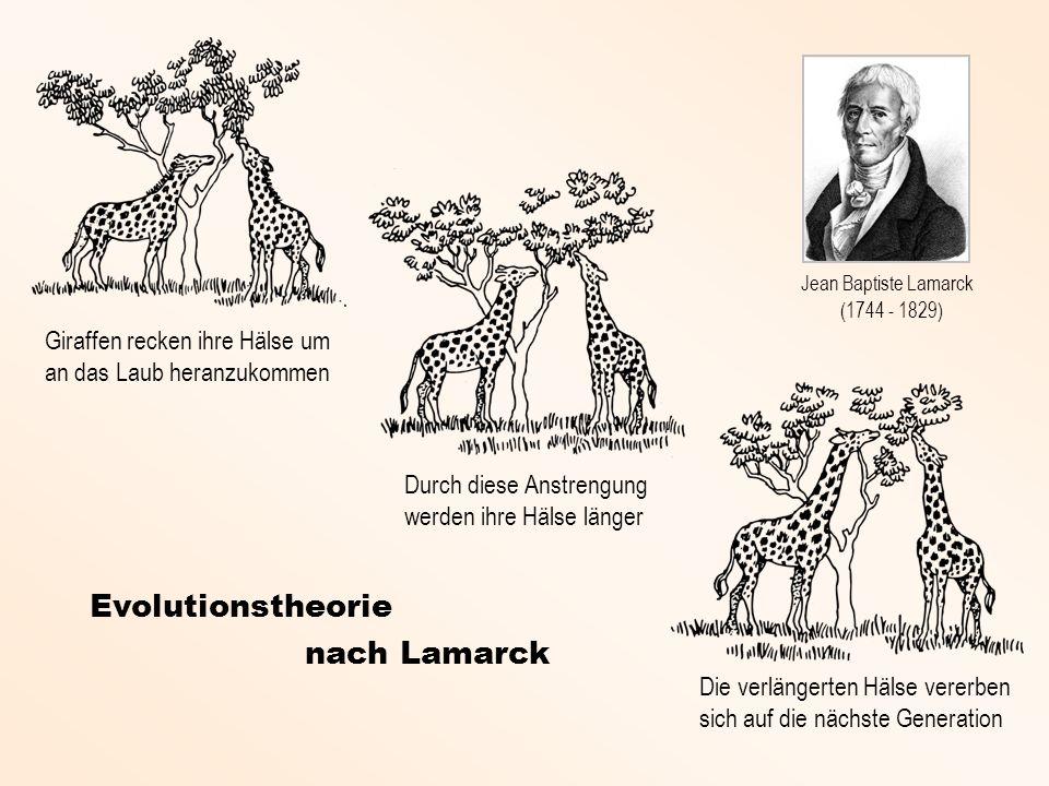 Der Evolutionsstratege