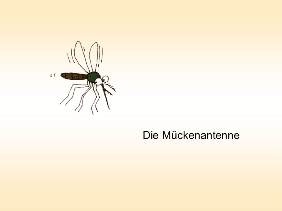 Der Tenor und die Mücken