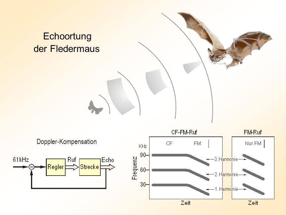 Echoortung der Fledermaus Doppler-Kompensation
