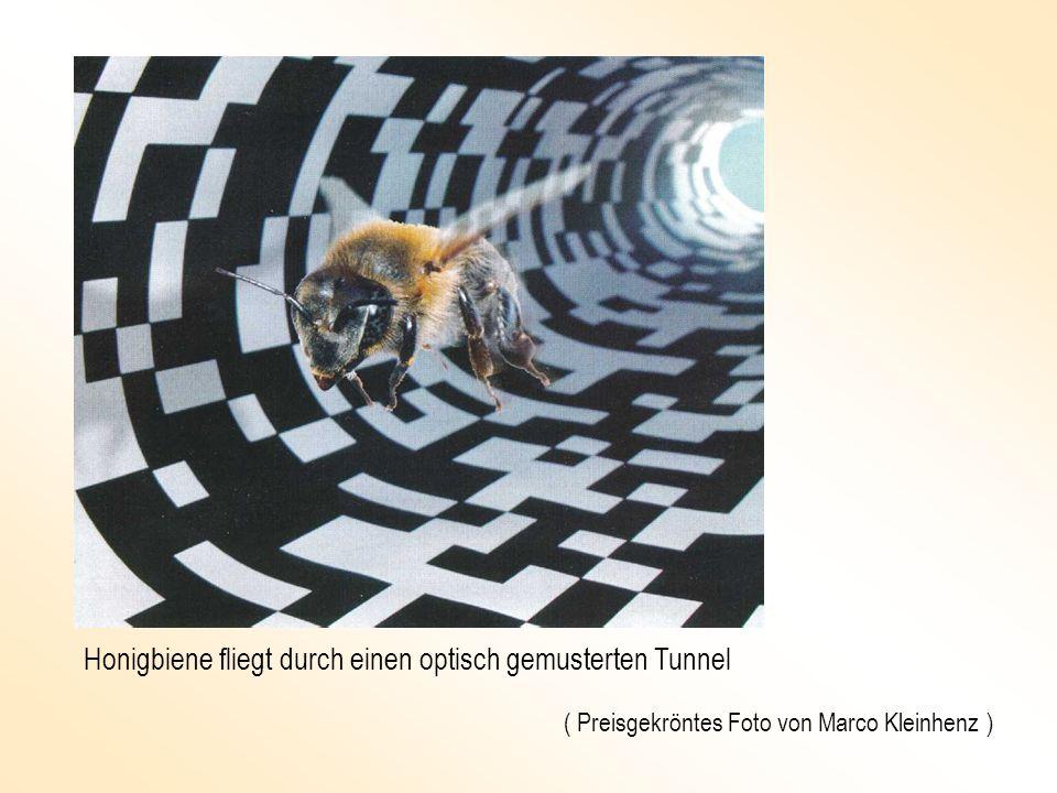 Honigbiene fliegt durch einen optisch gemusterten Tunnel ( Preisgekröntes Foto von Marco Kleinhenz )