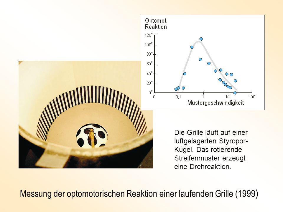 Messung der optomotorischen Reaktion einer laufenden Grille (1999 ) Die Grille läuft auf einer luftgelagerten Styropor- Kugel. Das rotierende Streifen