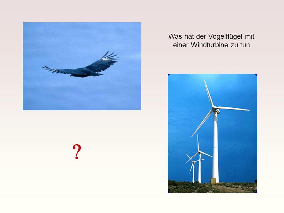 Was hat der Vogelflügel mit einer Windturbine zu tun