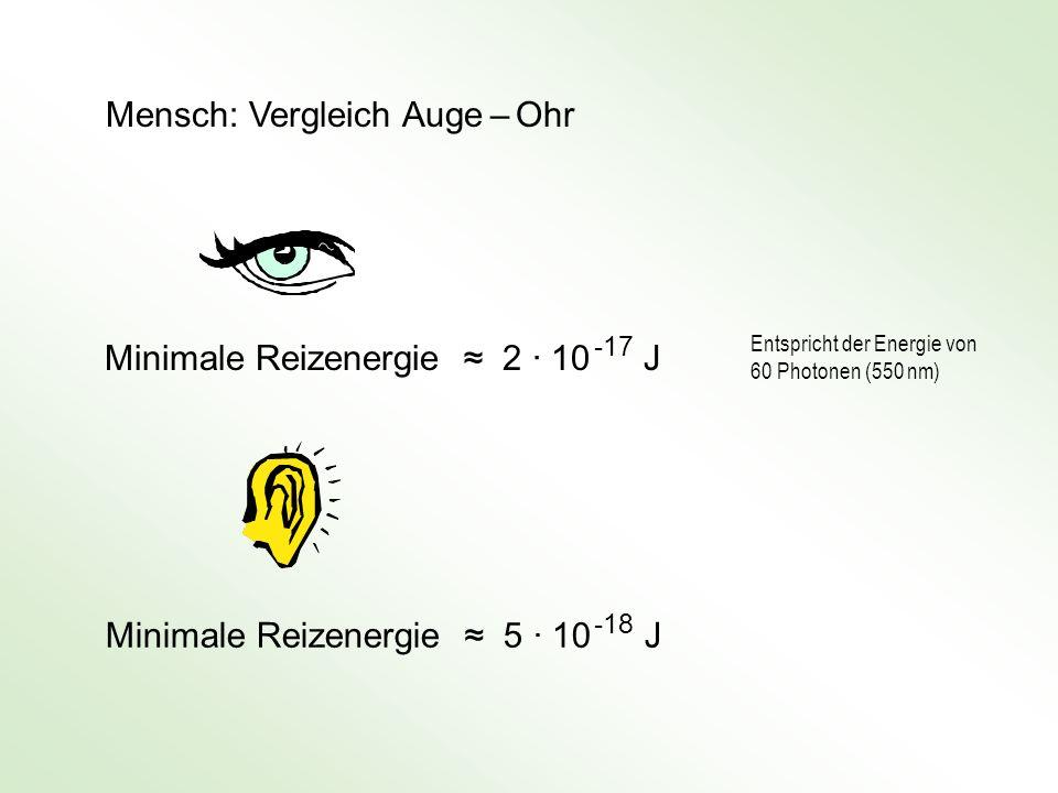 Mensch: Vergleich Auge – Ohr Minimale Reizenergie 2 · 10 -17 J Minimale Reizenergie 5 · 10 -18 J Entspricht der Energie von 60 Photonen (550 nm)
