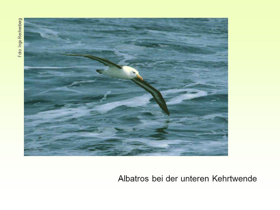Foto: Ingo Rechenberg Albatros bei der unteren Kehrtwende
