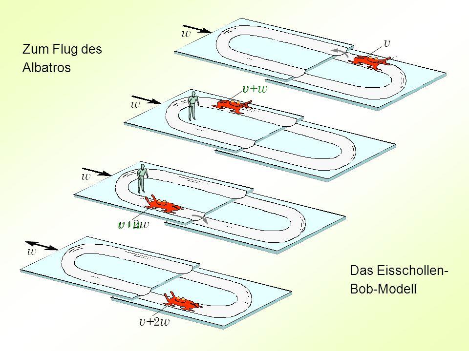 v v v+ 2 w v+ w Zum Flug des Albatros Das Eisschollen- Bob-Modell v+ w