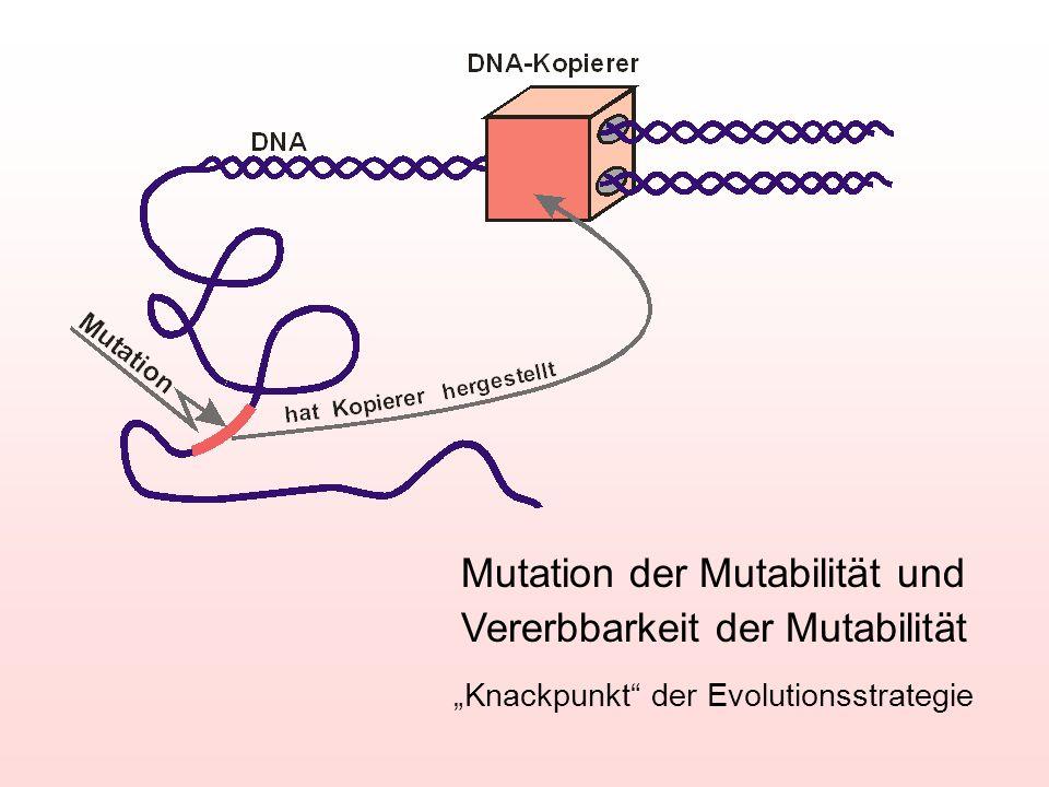 Mutation der Mutabilität und Vererbbarkeit der Mutabilität Knackpunkt der Evolutionsstrategie