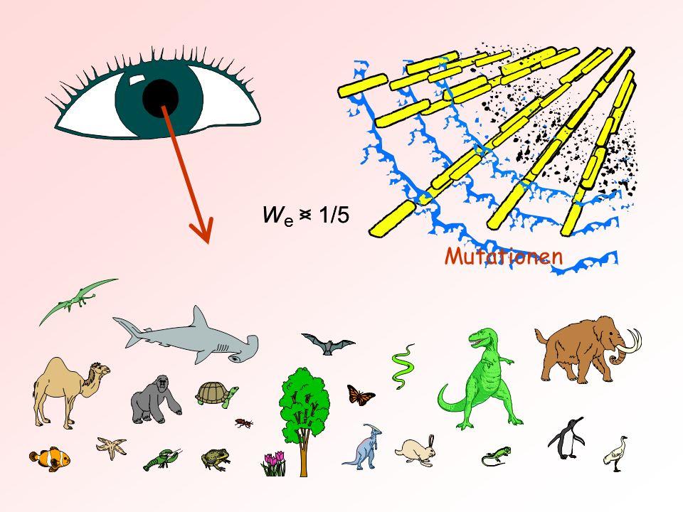 W e > 1/5 W e < 1/5 Mutationen