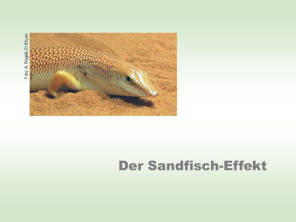 Der Sandfisch-Effekt Foto: A. Regabi El Khyari
