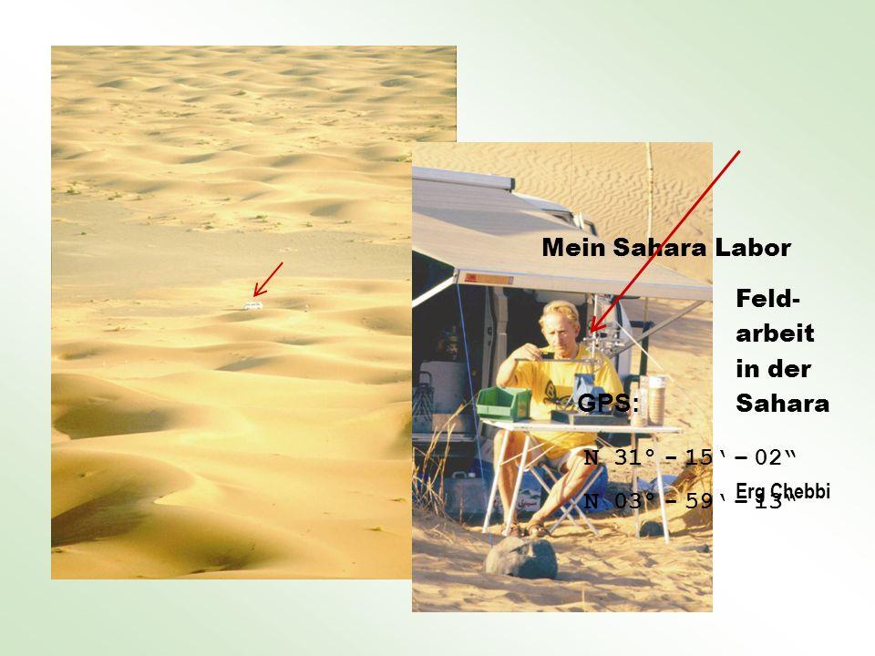 Feld- arbeit in der Sahara Erg Chebbi Mein Sahara Labor GPS: N 31° - 15 – 02 N 03° - 59 – 13