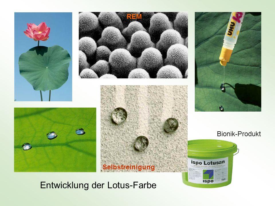 Entwicklung der Lotus-Farbe Bionik-Produkt REM Selbstreinigung