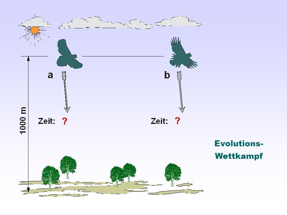 Evolutions- Wettkampf ? ?