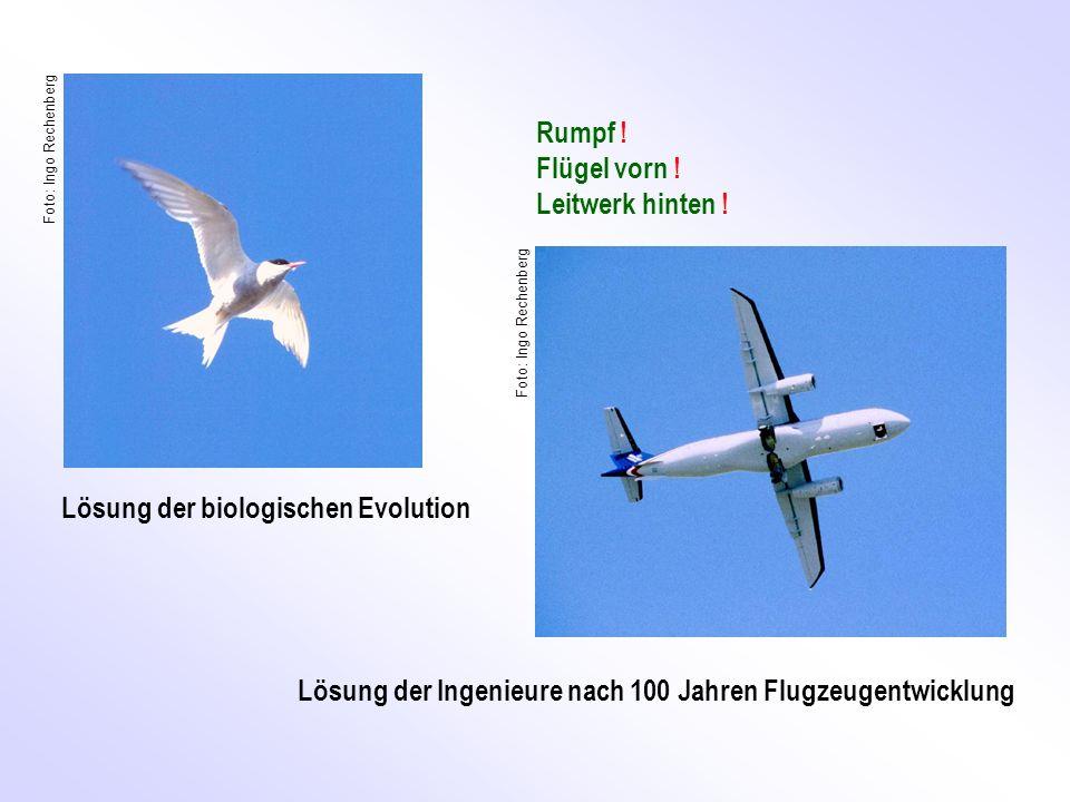 Rumpf ! Flügel vorn ! Leitwerk hinten ! Lösung der Ingenieure nach 100 Jahren Flugzeugentwicklung Lösung der biologischen Evolution Seeschwalbe Foto: