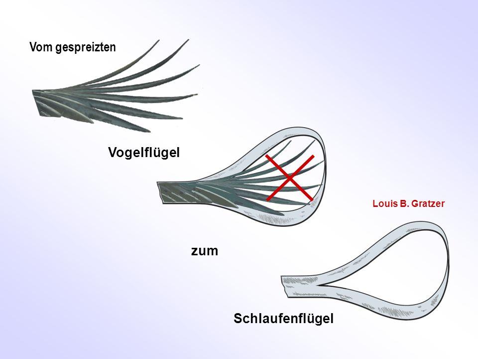 Vom gespreizten Vogelflügel Schlaufenflügel zum Louis B. Gratzer