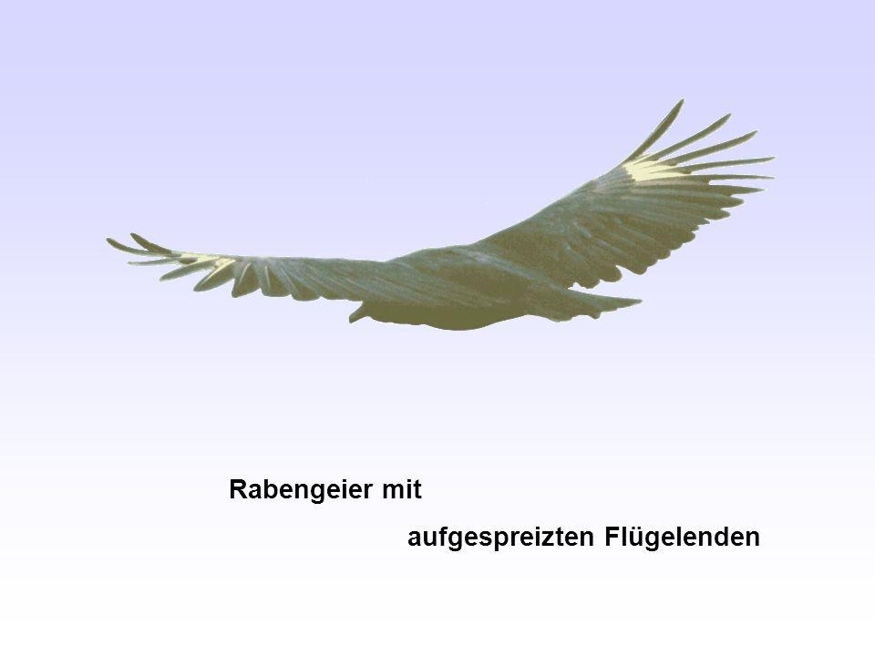 Tragflügelrandwirbel hinter einem Kleinflugzeug