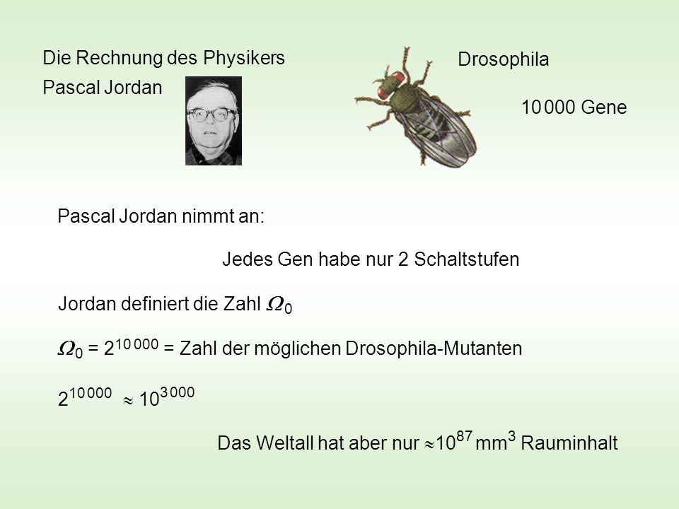 Drosophila 10 000 Gene Jedes Gen habe nur 2 Schaltstufen Pascal Jordan nimmt an: Jordan definiert die Zahl 0 0 = 2 10 000 = Zahl der möglichen Drosophila-Mutanten 2 10 000 10 3 000 Das Weltall hat aber nur 10 87 mm 3 Rauminhalt Die Rechnung des Physikers Pascal Jordan
