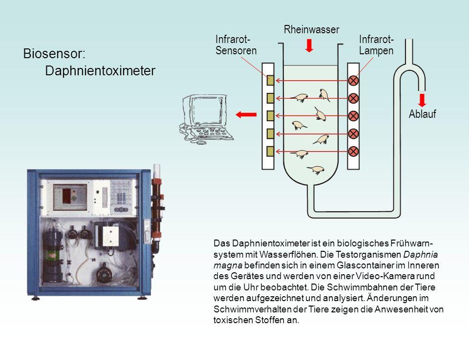 Das Daphnientoximeter ist ein biologisches Frühwarn- system mit Wasserflöhen.