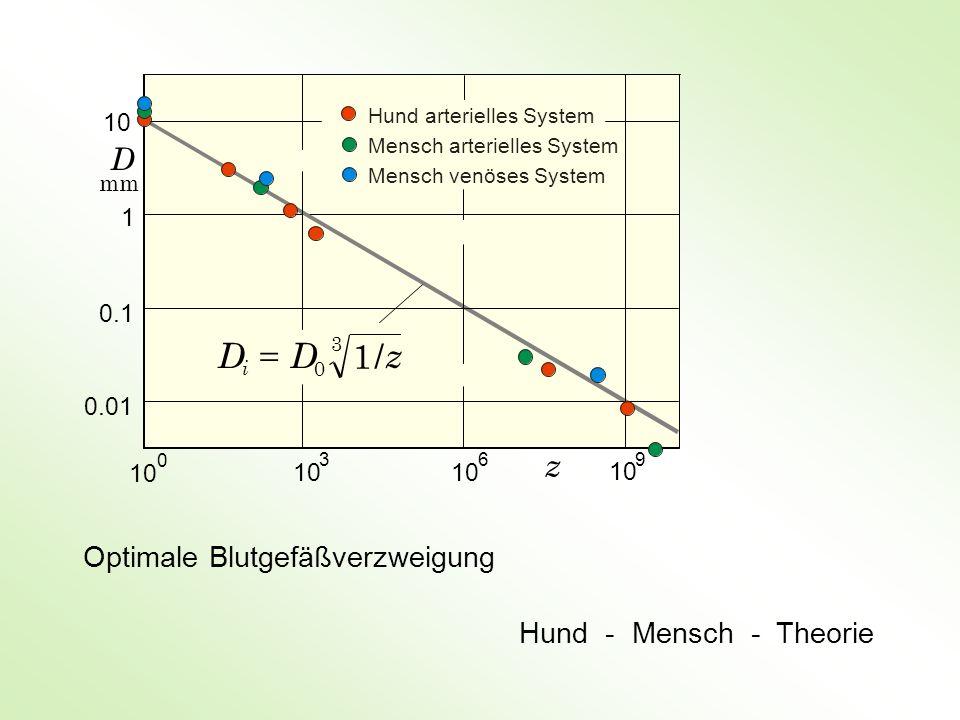 Optimale Blutgefäßverzweigung Hund - Mensch - Theorie 10 396 z 3 0 /1 z DD i 10 1 0.1 0.01 10 0 D mm Hund arterielles System Mensch arterielles System