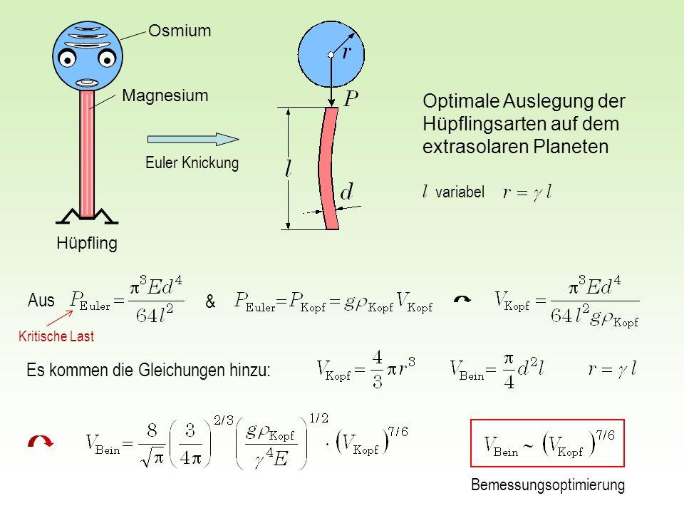 Aus & Optimale Auslegung der Hüpflingsarten auf dem extrasolaren Planeten Es kommen die Gleichungen hinzu: Euler Knickung l variabel Osmium Hüpfling M