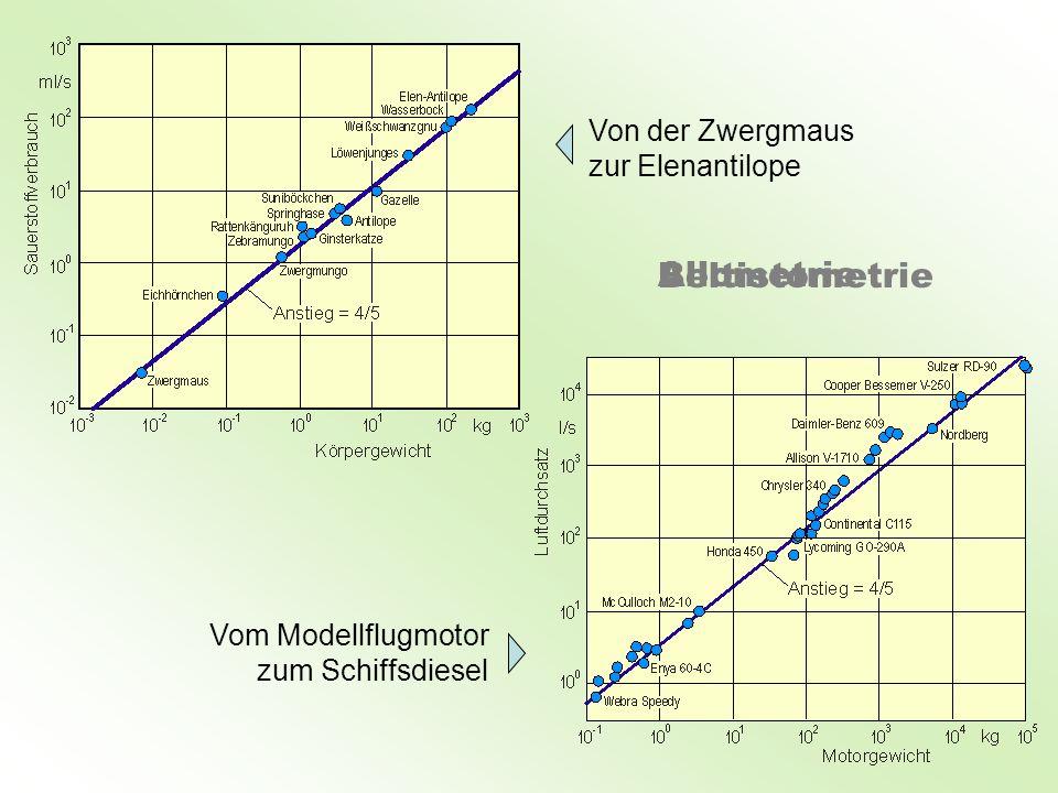 Von der Zwergmaus zur Elenantilope Vom Modellflugmotor zum Schiffsdiesel Beltistometrie Allometrie