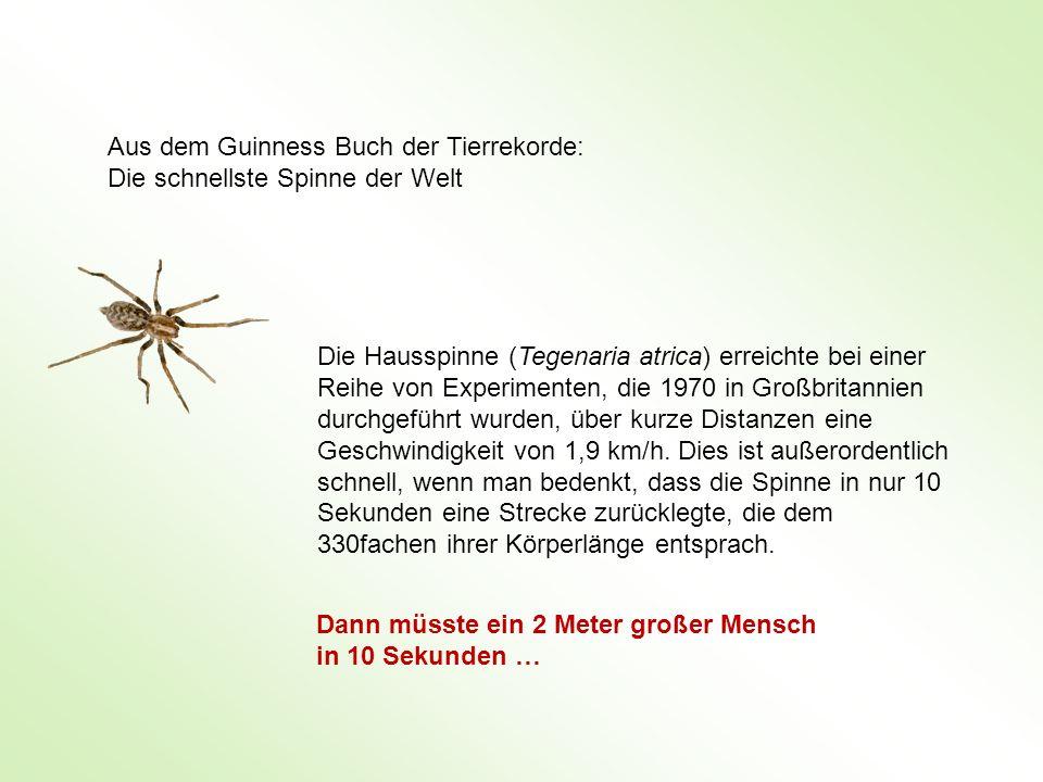 Aus dem Guinness Buch der Tierrekorde: Die schnellste Spinne der Welt Die Hausspinne (Tegenaria atrica) erreichte bei einer Reihe von Experimenten, di