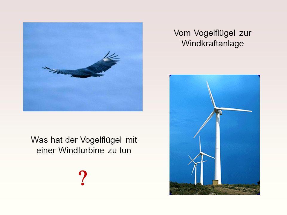 Was hat der Vogelflügel mit einer Windturbine zu tun Vom Vogelflügel zur Windkraftanlage