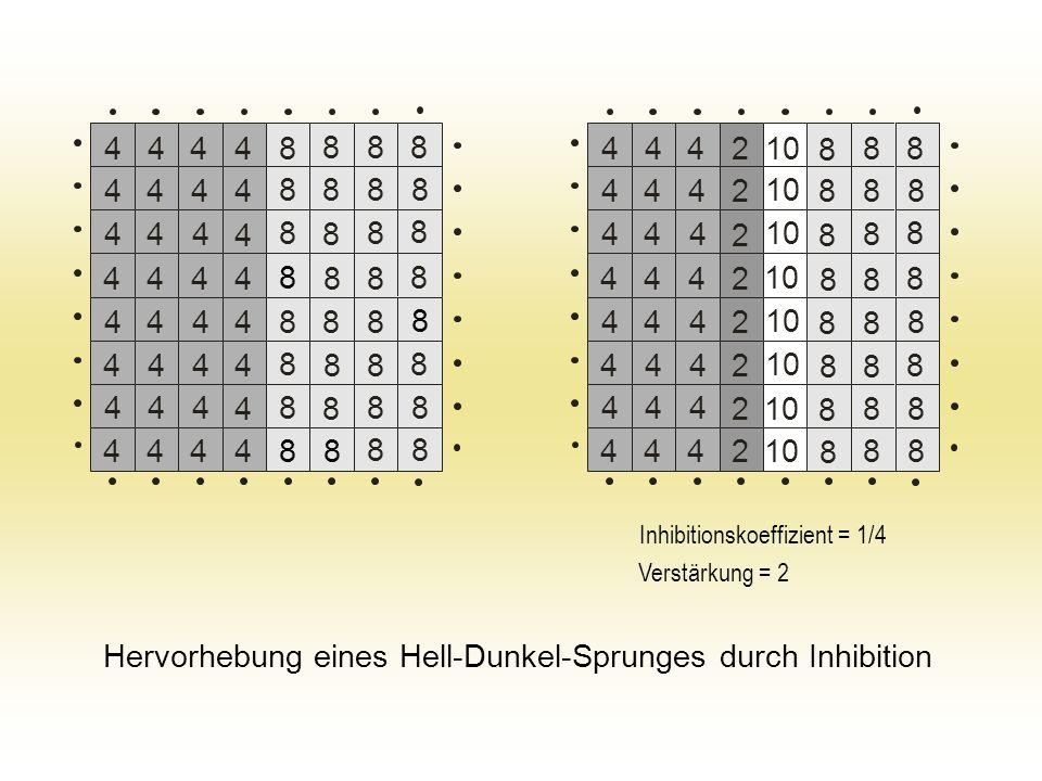 44484 4 4 4 4 4 4 444 444 444 444 444 444 8 8 8 8 8 8 8 8 8 8 8 8 8 8 8 8 8 8 8 8 8 8 8 8 8 8 8 8 8 8 8 4444 444 10 2 2 2 2 2 2 2 444 444 444 444 444 444 8 8 8 8 8 8 8 8 8 8 8 8 8 8 8 8 8 8 8 8 8 8 8 8 4442 Hervorhebung eines Hell-Dunkel-Sprunges durch Inhibition Inhibitionskoeffizient = 1/4 Verstärkung = 2