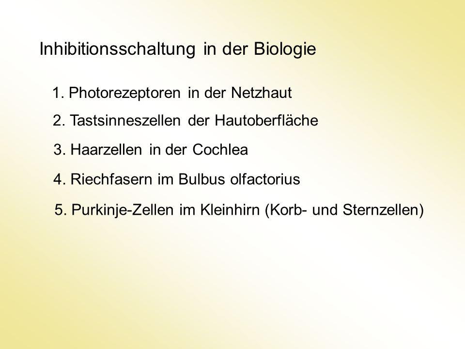 Inhibitionsschaltung in der Biologie 1.Photorezeptoren in der Netzhaut 2.