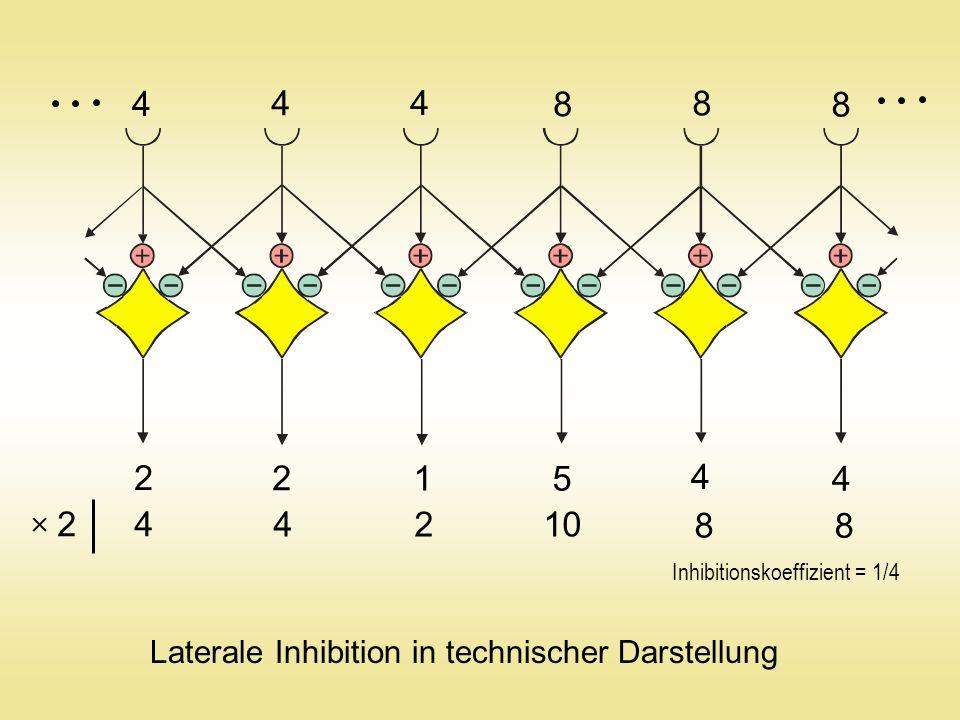4 4 4 8 8 8 2 2 1 5 4 4 4 4210 8 8 2 Laterale Inhibition in technischer Darstellung Inhibitionskoeffizient = 1/4