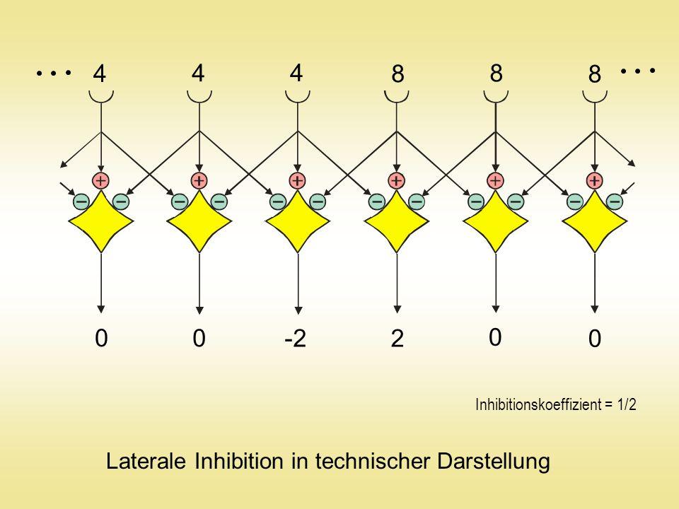 0 0 -200 200 0 0 Laterale Inhibition in technischer Darstellung Inhibitionskoeffizient = 1/2 400 800