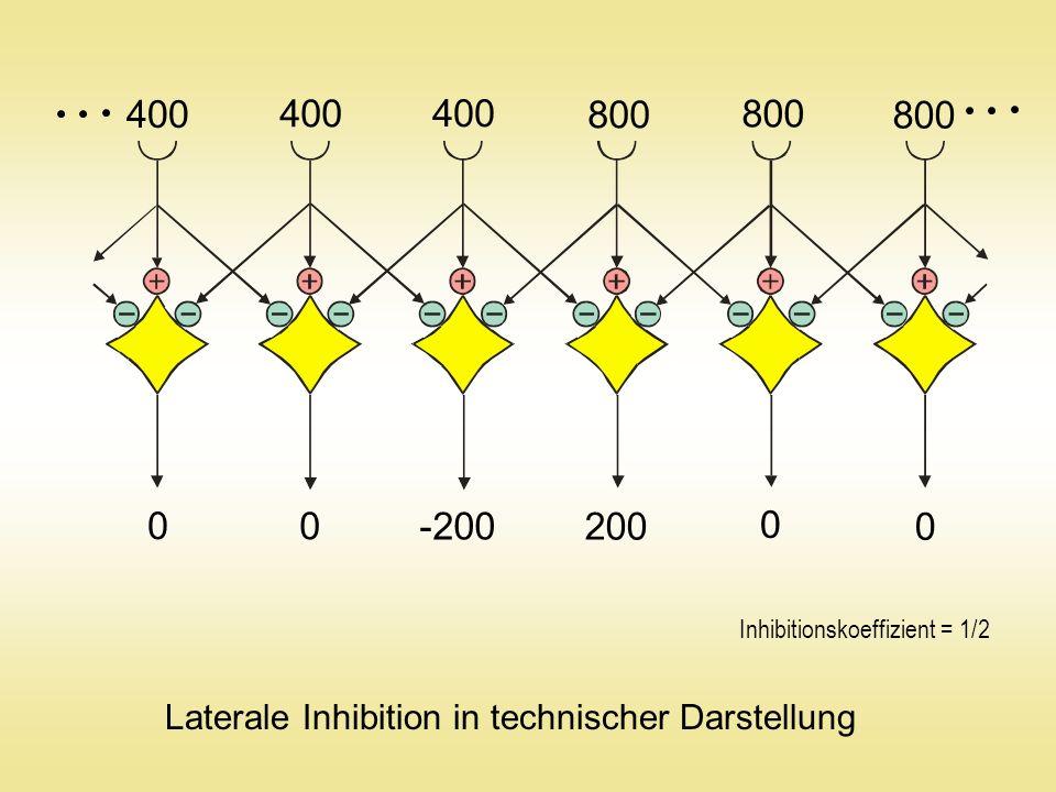 Vertikale und horizontale Inhibitionsoperation Originale Helligkeitsverteilung Hinter dem Inhibitionsfilter Verstärkung um den Faktor 2 (Inhibitionskoeffizient = 1/ 8)
