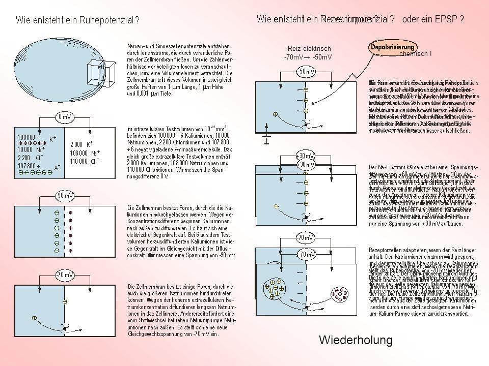 Wiederholung oder ein EPSP ? -70mV -50mV chemisch ! Reiz elektrisch