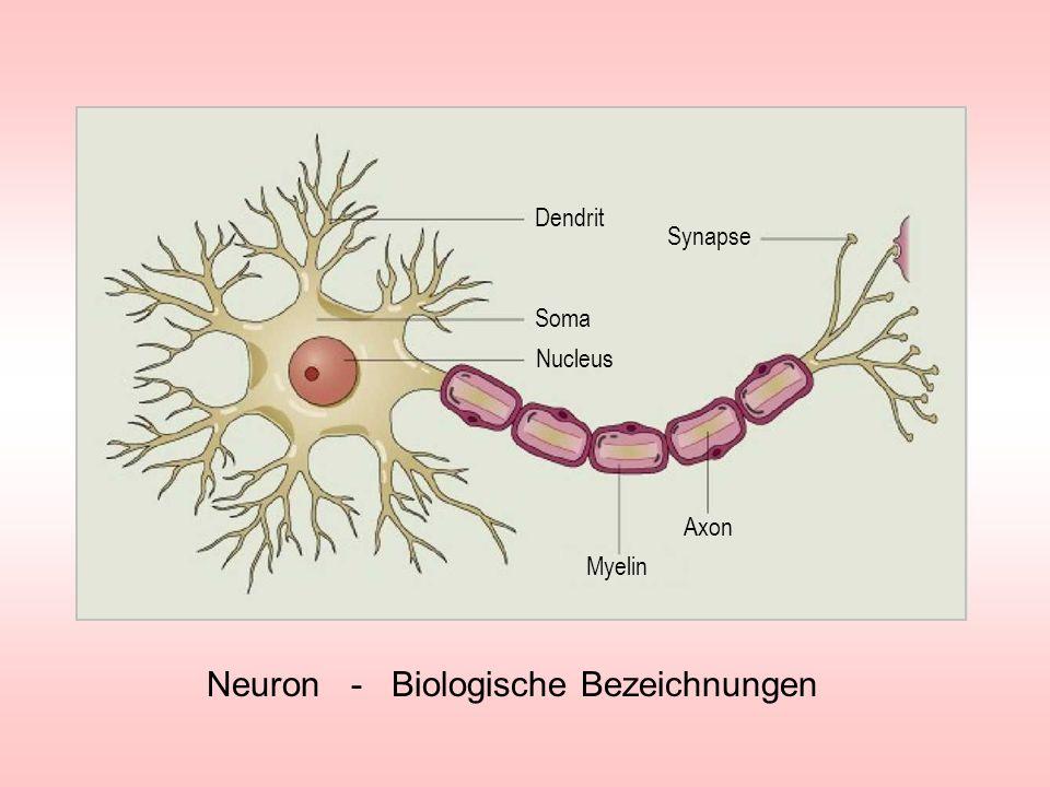 Mögliche Rechenoperation mit einem Neuron Impulsaddition - 50mV - 70mV fe1fe1 fe2fe2 fafa fe1fe1 fe2fe2 fafa +