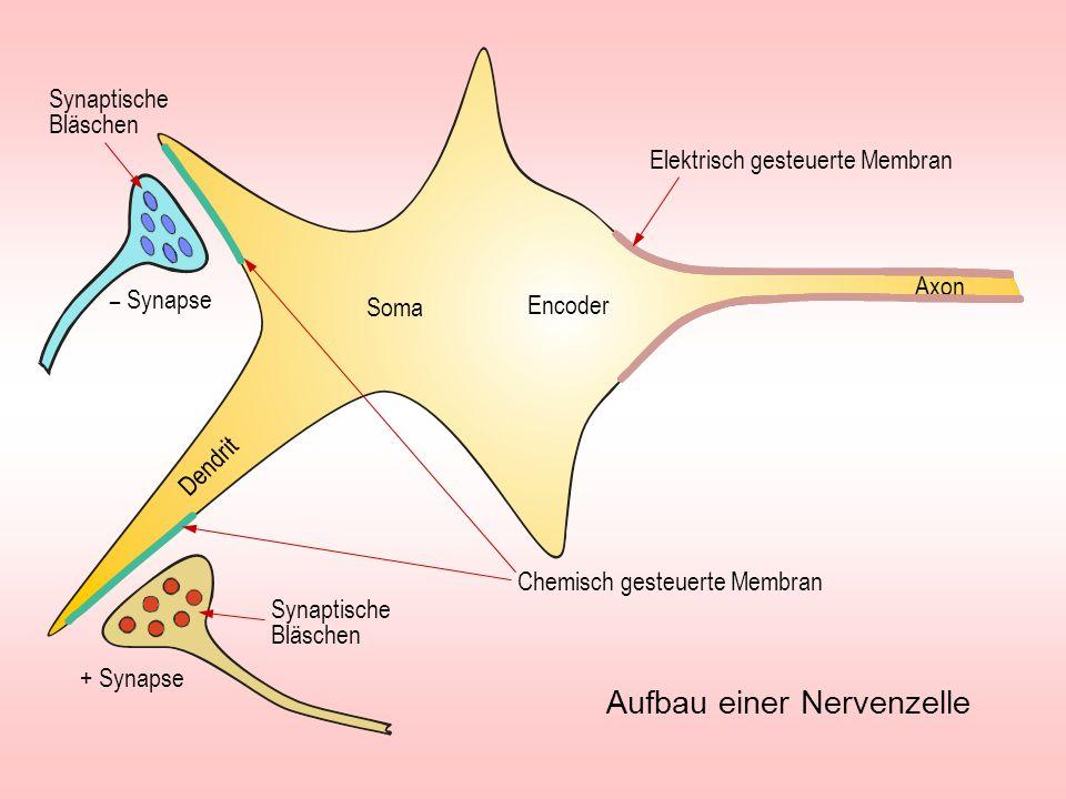 Elektrisch gesteuerte Membran Fortleitung eines Nervenimpulses