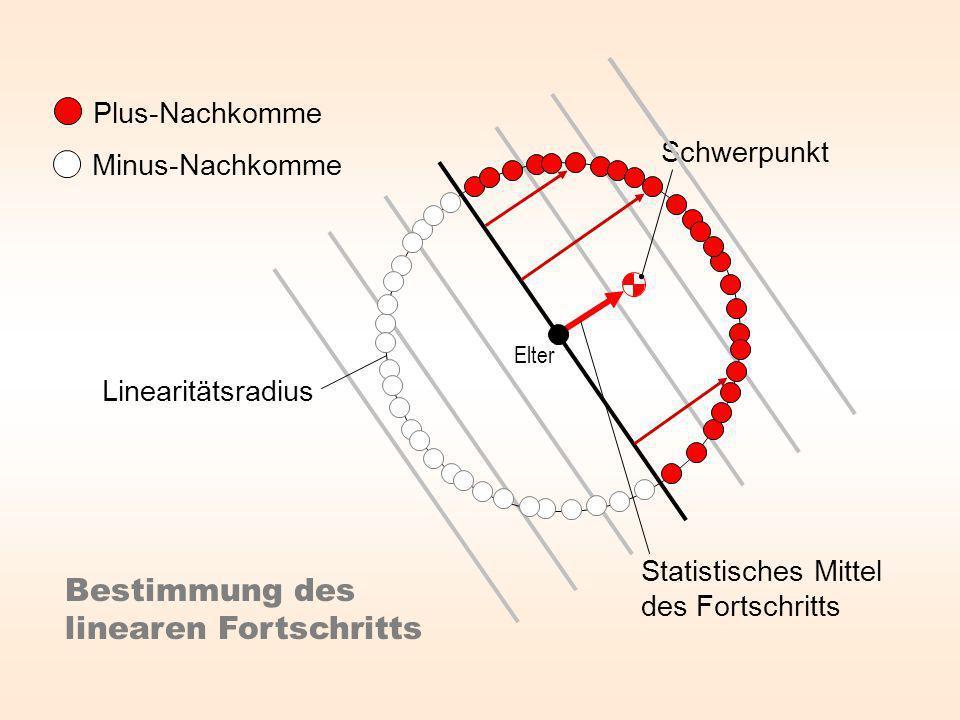 Plus-Nachkomme Minus-Nachkomme Statistisches Mittel des Fortschritts Bestimmung des linearen Fortschritts Elter Linearitätsradius Schwerpunkt