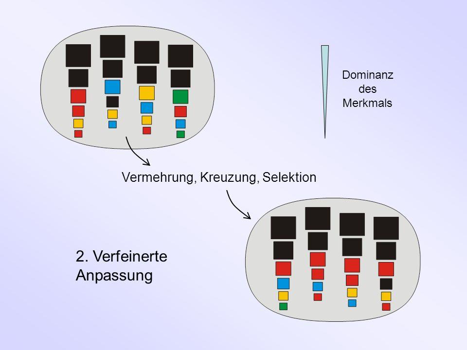 Vermehrung, Kreuzung, Selektion 2. Verfeinerte Anpassung Dominanz des Merkmals