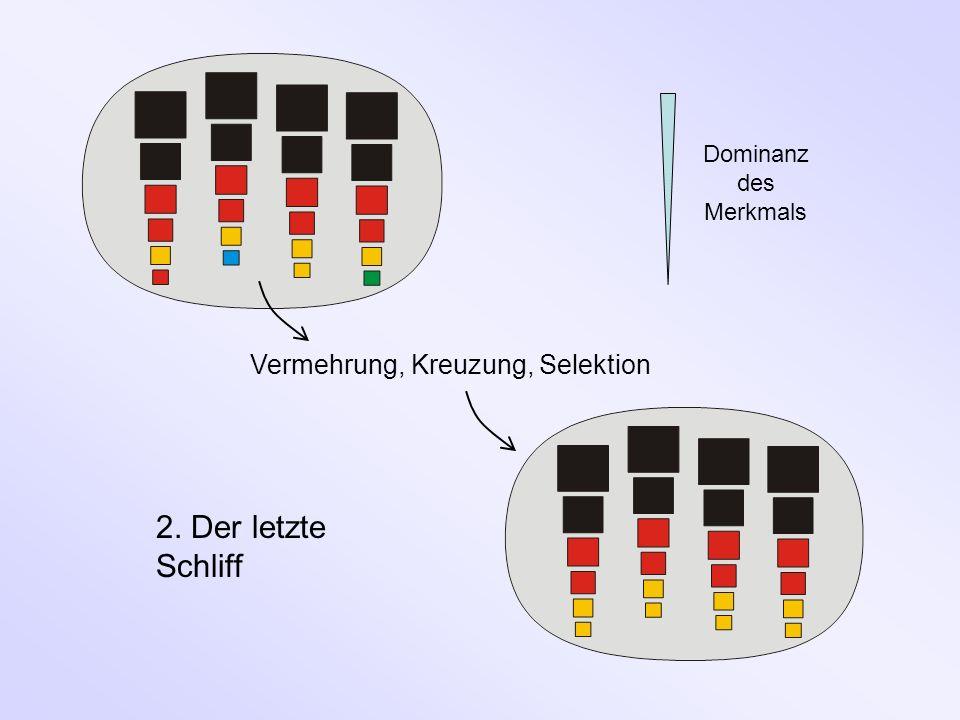 Vermehrung, Kreuzung, Selektion 2. Der letzte Schliff Dominanz des Merkmals