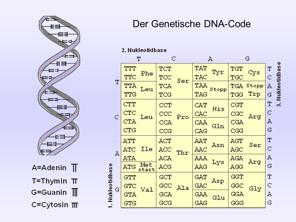 Der Genetische DNA-Code