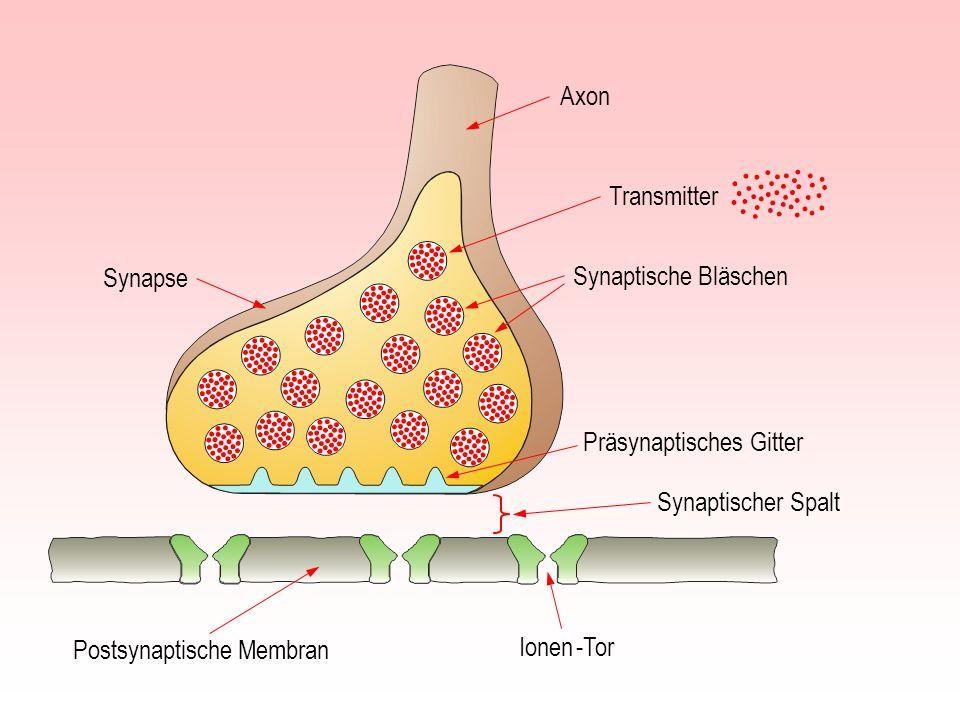 Axon Synaptischer Spalt Postsynaptische Membran Präsynaptisches Gitter Synapse Ionen -Tor Transmitter