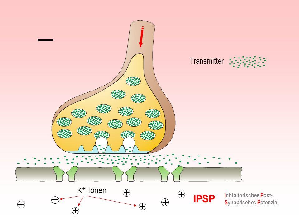 IPSP Inhibitorisches Post- Synaptisches Potenzial Transmitter K + -Ionen