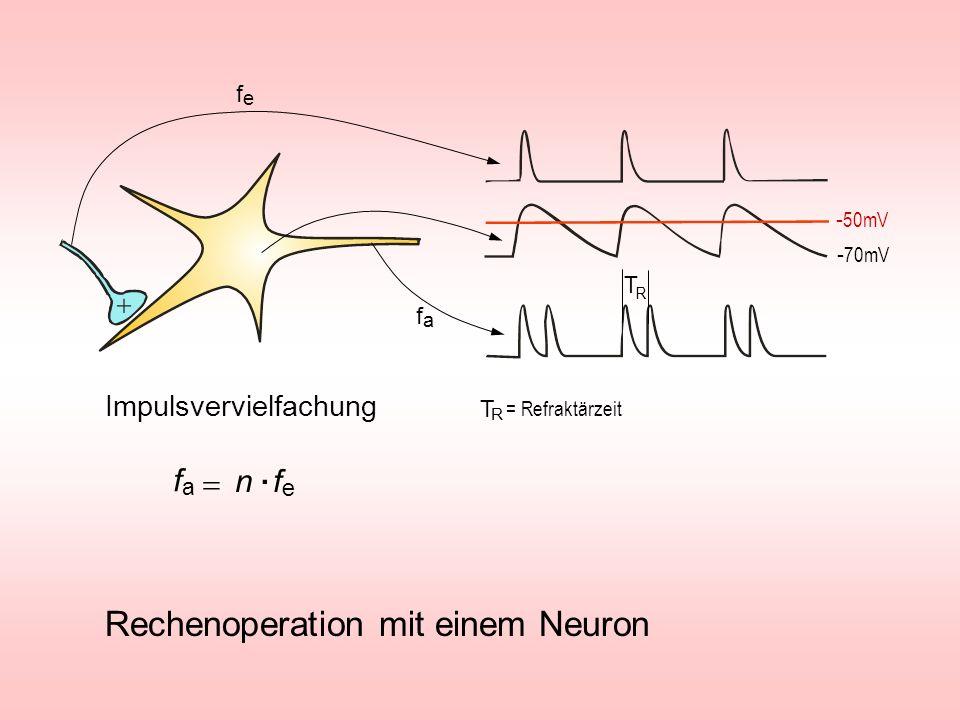 = Refraktärzeit T R T R Rechenoperation mit einem Neuron Impulsvervielfachung - 50mV - 70mV fefe fafa n f e fafa.