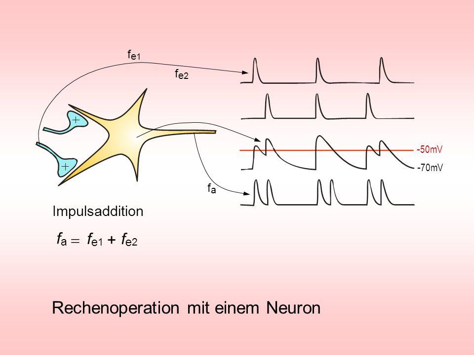 Rechenoperation mit einem Neuron Impulsaddition - 50mV - 70mV fe1fe1 fe2fe2 fafa fe1fe1 fe2fe2 fafa +