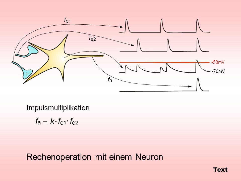 Rechenoperation mit einem Neuron Impulsmultiplikation - 50mV - 70mV fe1fe1 fe2fe2 fafa fe1fe1 fe2fe2 fafa k.. Text