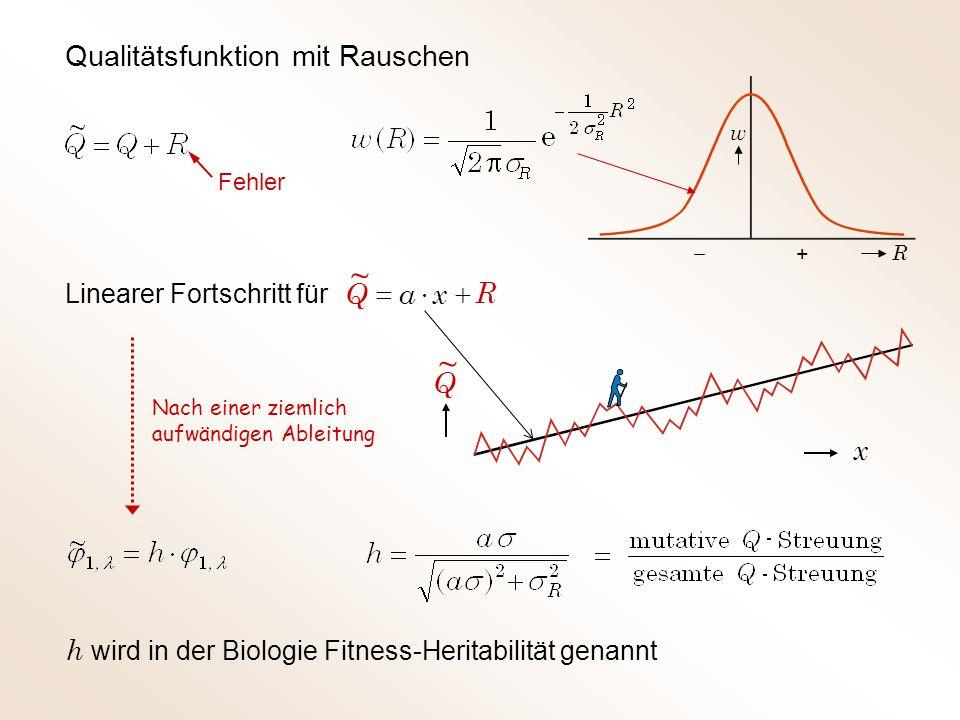 Qualitätsfunktion mit Rauschen Fehler + w R Linearer Fortschritt für Nach einer ziemlich aufwändigen Ableitung h wird in der Biologie Fitness-Heritabilität genannt R xaQ ~ Q ~ x