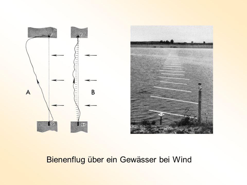 Bienenflug über ein Gewässer bei Wind