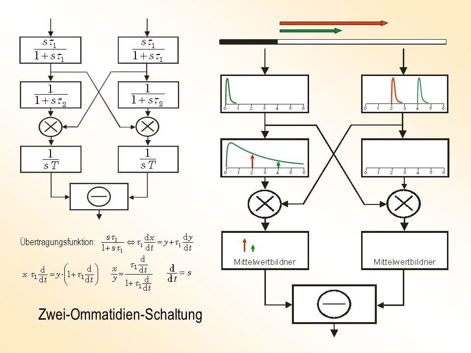 Zwei-Ommatidien-Schaltung Übertragungsfunktion: