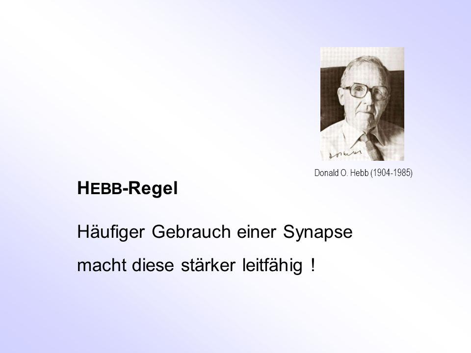 Donald O. Hebb (1904-1985) H EBB -Regel Häufiger Gebrauch einer Synapse macht diese stärker leitfähig !