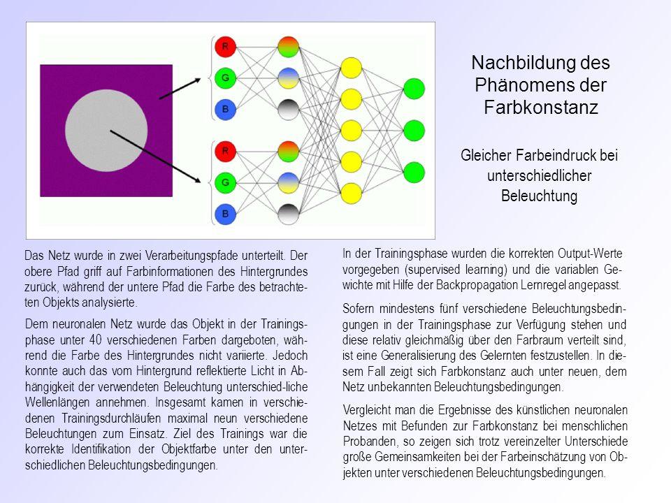 Das Netz wurde in zwei Verarbeitungspfade unterteilt. Der obere Pfad griff auf Farbinformationen des Hintergrundes zurück, während der untere Pfad die