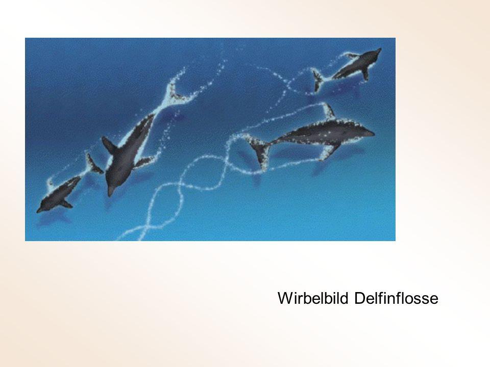 Wirbelbild Delfinflosse
